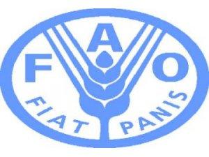 ÇİN`DE YENİ TÜR KUŞ GRİBİ GÖRÜLMESİNİN ARDINDAN FAO, HİJYEN ÖNLEMLERİ ALINMASINI ÖNERDİ