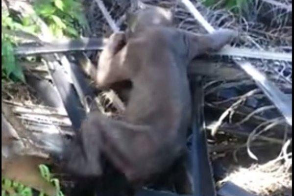 Korkunç yaratık böyle görüntülendi