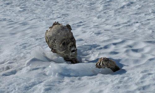 Buzların altından dehşet çıktı