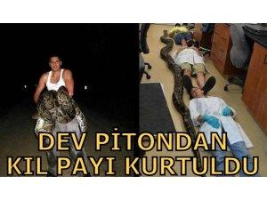 DEV PİTONDAN KIL PAYI KURTULDU!