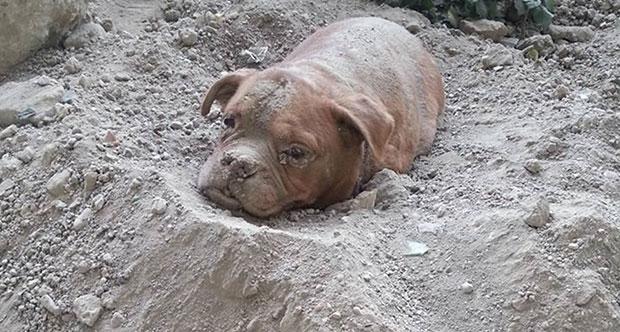 Köpeğini canlı canlı gömdü