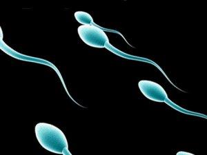 Sperm Sayısı 120 Milyondan 15 Milyona Düştü