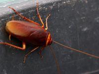 Hamam Böceklerinden Kurtulmanın Doğal Yolu