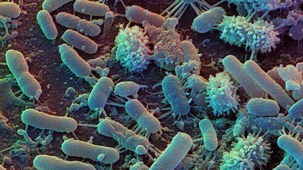 160323121958_bacteria.jpg