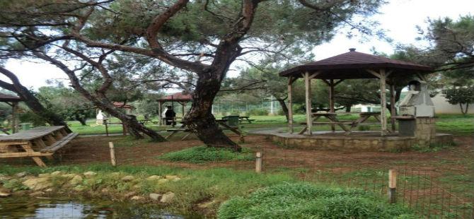 pine-61-001.jpg